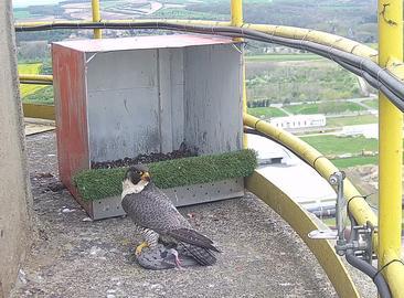 Система камер видеонаблюдения на нефтеперерабатывающем заводе в городе Кралупы-над-Влтавой (Kralupy nad Vltavou)